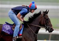 5 November 2009: Zilva works out in preparation for the Breeders Cup at Santa Anita Race Track in Arcadia, CA.