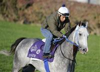 4 November 2010: Due Date, trained by Stephen R. Margolis and to be ridden by jockey Garrett Gomez, during work outs for the 2010 Breeders Cup at Churchill Downs in Louisville, Kentucky.(Scott Serio/Eclipse Sportswire)