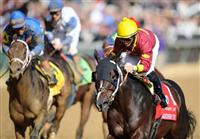 6 November 2010: Big Drama, ridden by Eibar Coa and trained by David Fawkes, romps to a win in the Sentient Jet Breeders Cup Sprint at Churchill Downs in Louisville, KY.(Scott Serio/Eclipse Sportswire)