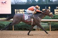 14 March 2009: Win Willie with jockey Cliff Berry and trainer McLean Robertson wins The Rebel handicap at Oaklawn in Hot Springs, Arkansas