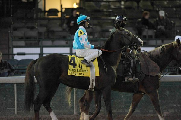 November 26, 2010: Giant Oak and Shawn Bridgmohan in the post parade for the Clark Handicap at Churchill Downs in Louisville, Kentucky.