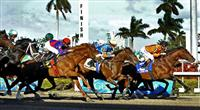 31 January 2009: Saratoga Spinner, with Julien Leparoux in the saddle, settles next to early leader Bear's Rocket with jockey Kent Desormeaux on the way to winning the 20th running of the Grade 3 Holy Bull Stakes for three-year-olds at Gulfstream Park in Hallandale, Florida.