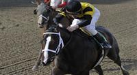 25 April 2009: Mr. Fantasy, with jockey Richard Migliore in the saddle, wins the 130th running of the grade 3 Withers Stakes for three year olds at Aqueduct Race Track in Ozone Park, New York.