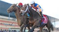Overanalyze (no. 1A), ridden by Ramon Dominguez and trained by Todd Pletcher, wins the 99th running of the grade 2 Remsen Stakes for two year olds on November 24, 2012 at Aqueduct Race Track in Ozone Park, New York. (Bob Mayberger/Eclipse Sportswire)