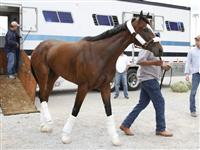 Dreaming of Julia arrives at Churchill Downs.