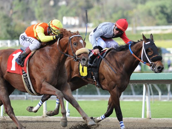 January 22, 2011.Midnight Transfer ridden by Joel Rosario, coming up on the outside to win the San Pedro Stakes at Santa Anita Park, Arcadia, CA