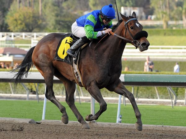 January 22, 2011.Include Me Out ridden by Joseph Talamo leading in the stretch and winning the LaCanada Stakes at Santa Anita Park, Arcadia, CA