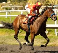 Executiveprivilege wins debut