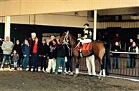 Adirondack King in Parx winners circle (12-30-14)