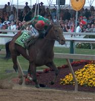 Afleet Alex with Jeremy Rose winning 2005 Preakness