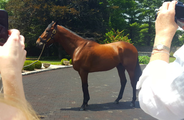 American Pharoah poses for photos with a tour group at Coolmore Ashford Stud in Versailles, Kentucky.