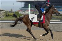 Arod prepares for 2017 Woodbine Mile