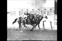 Arrogate (inside) and John Longden win the 1956 Del Mar Handicap to make the rider the winningest jockey in the world.