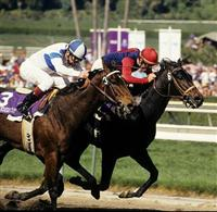 Hollywood Wildcat wins the Breeder's Cup Distaff