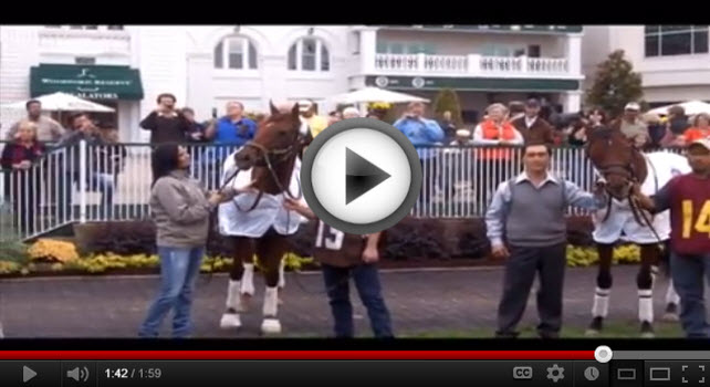 Video of Breeders' Cup champions