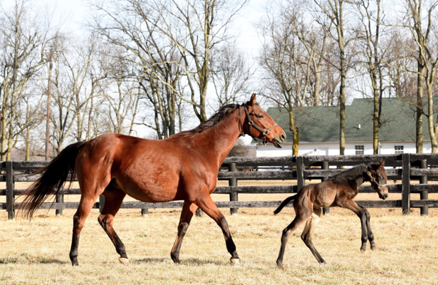 Sweepstakes winners zenyattas foals name