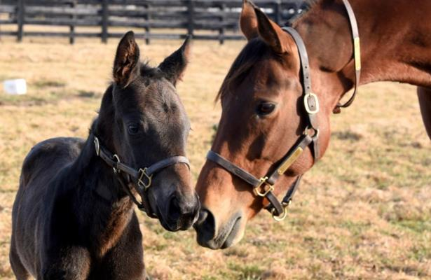 Watch: Beholder foal Q B One's journey from birth to Santa Anita