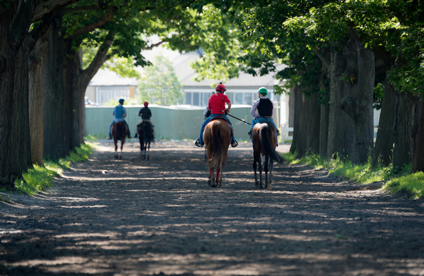 Quarantine in place at Belmont Park as horse tests positive for EHV-1