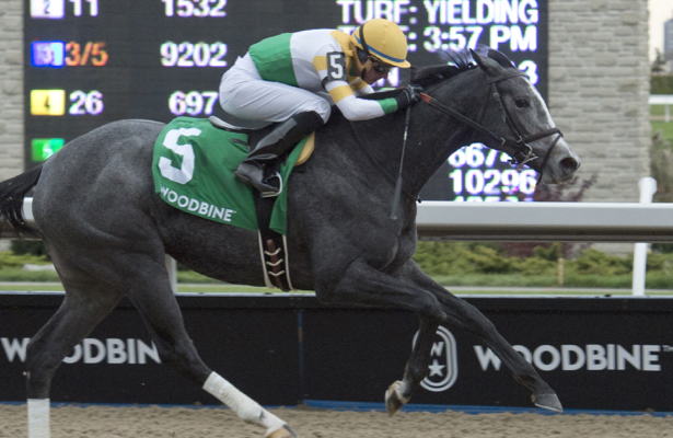 'Dream filly' Bold Script can step toward Queen's Plate in the Selene