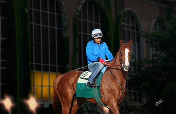 California Chrome Belmont art 615 X 400