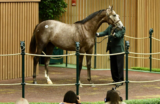 Coolmore lands California Chrome's $1 million half brother