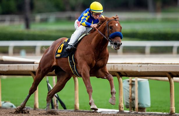 'Superstar material'; Baffert trains Charlatan for stakes debut