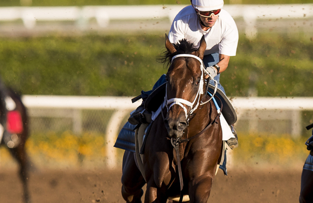 City of Light, Accelerate swift in Pegasus World Cup works