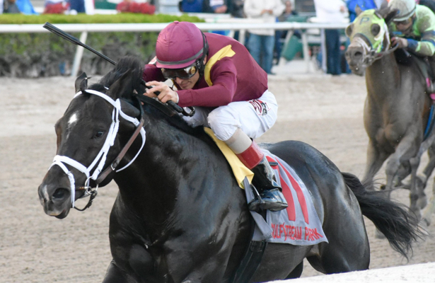 Coal Front could stretch out off Saturday's Mr. Prospector win