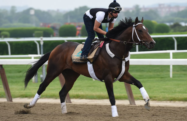 Commanding Curve gallops in preparation for the Belmont Stakes