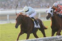 Conduit rolls to victory over Presious Passion in the 2009 Breeders' Cup Turf.