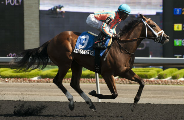 Conquest Tsunami romps in 2014 Victoria at Woodbine