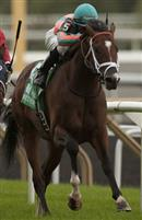 Conquest Typhoon wins the 2014 Summer Stakes at Woodbine Racecourse.