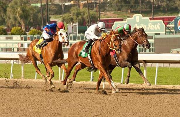 Cyclometer wins 2014 Midnight Lute Stakes.