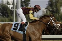 Discreet Dancer takes an allowance race at Gulfstream on Jan. 7 2012