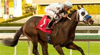 Distinctiv Passion wins at Santa Anita on 12-28-12.
