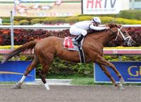 Red Rifle winning a Maiden Special Weight race at Gulfstream Park.