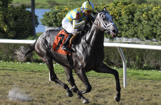 Dance Strike brings star potential to Gulfstream's Tropical Park Derby