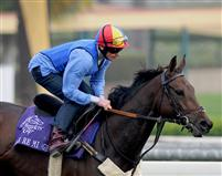 Dar Re Mi before the 2009 Breeders' Cup