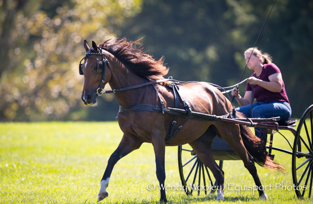 Retired Racehorse Project proves Thoroughbreds' versatility