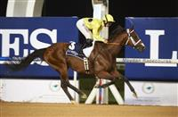 Desert Force wins at Meydan (12-1-16)