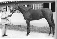 Flashback: Dr. Fager triumphs on turf in the United Nations