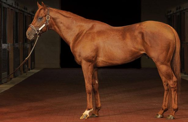 Drosselmeyer stallion 615 X 400