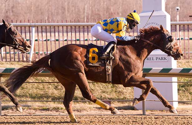 Cerro Tangles With Dynamic Strike In Canonero Ii Horse