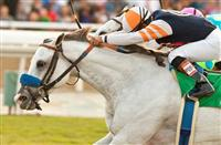 Egg Drop wins 2013 Goldikova.