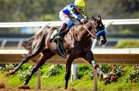 Del Mar Futurity-bound Eight Rings has Starlight excited
