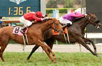 Fanticola wins 2015 Royal Heroine