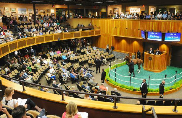 Laoban colt leads Saratoga Fall Mixed Sale as records fall