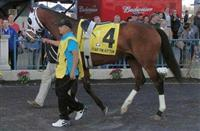 Fear the Kitten in paddock prior to 2013 Spiral Stakes.