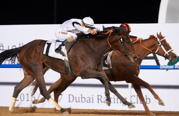 Furia Cruzada (white colours) just held on to take the featured $250,000 Group 2 Al Maktoum Challenge Round 2 for trainer, Erwan Charpy and jockey, Antonio Fresu in the Dubai World Cup Carnival at Meydan Racecourse on Thursday February 2, 2017.