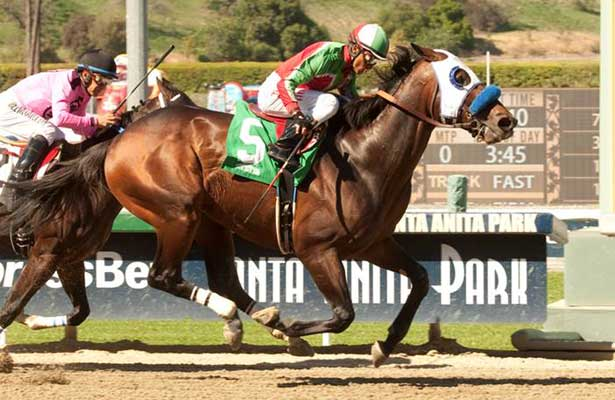 Fury Kapcori wins 2014 Santana Mile